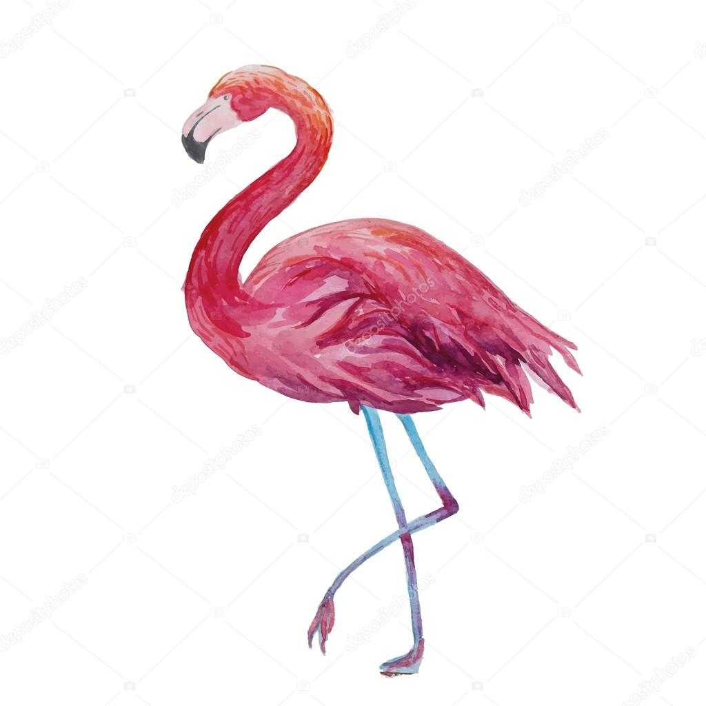 Draw Plan Watercolor Flamingo Stock Vector 169 Dinal 62047769