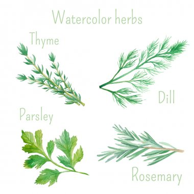 Watercolor set of herbs and spices: rosemary, dill, parsley, thyme clip art vector
