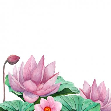 Water lily border