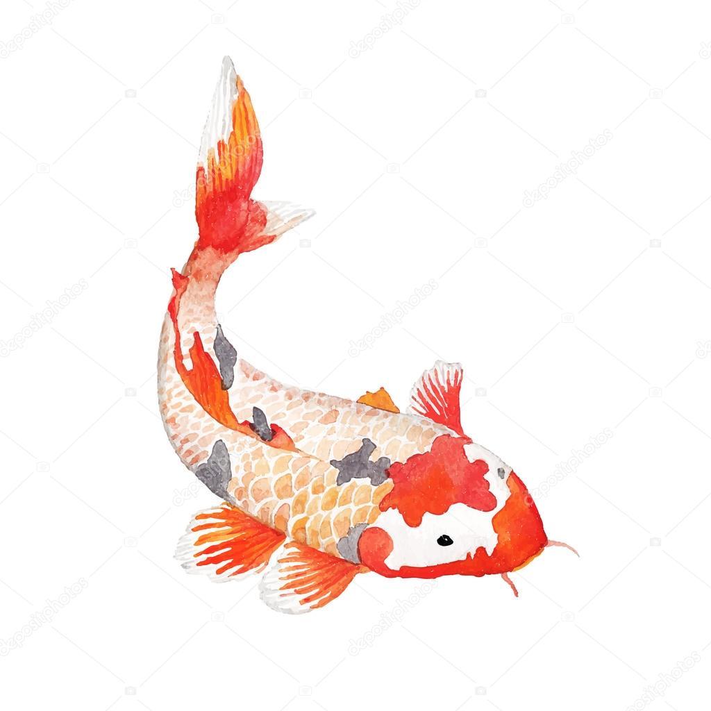Watercolor rainbow carp stock vector dinal 65051041 for Fraie carpe koi