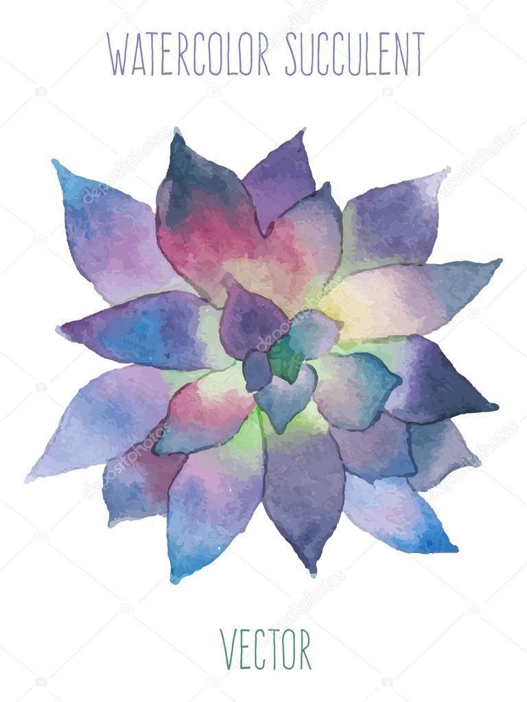 Watercolor violet succulent