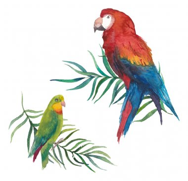 Tropical birds on branches isolated