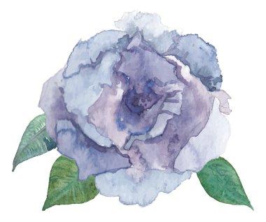 watercolor natural rose flower
