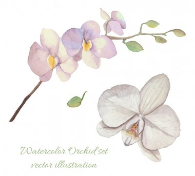 Watercolor orchid blossom background