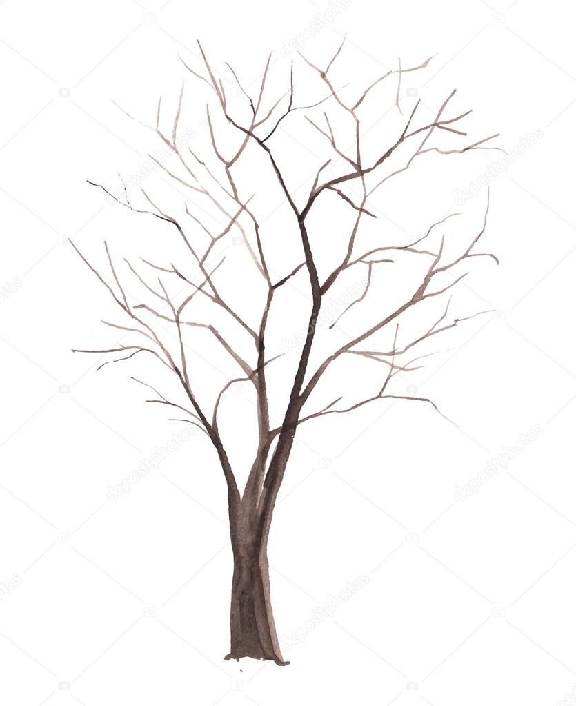 Watercolor Tree Without Leaves Isolated Stock Vector