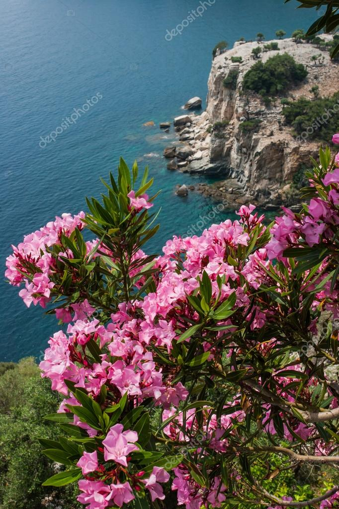 Pink flowers over the bay