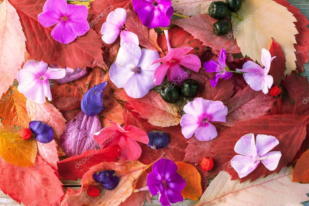 Colorful leaves , flowers and berries background