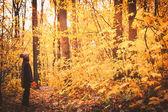 Lehullott levelek az őszi erdő nő