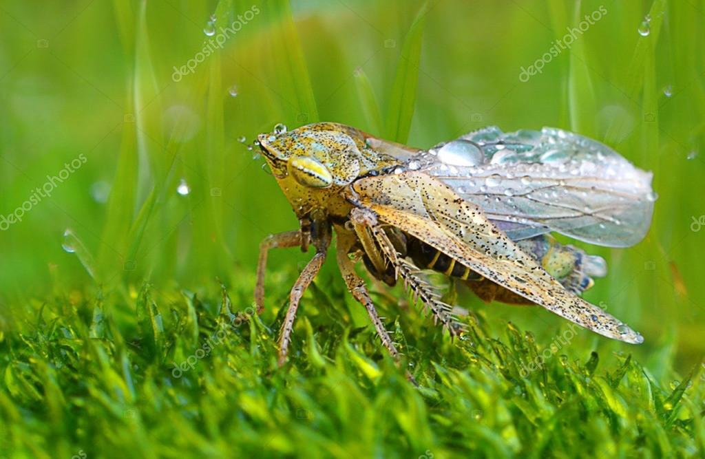 Sfondo Pc Natura Sfondi Per Desktop Natura Foto Stock Chemmy