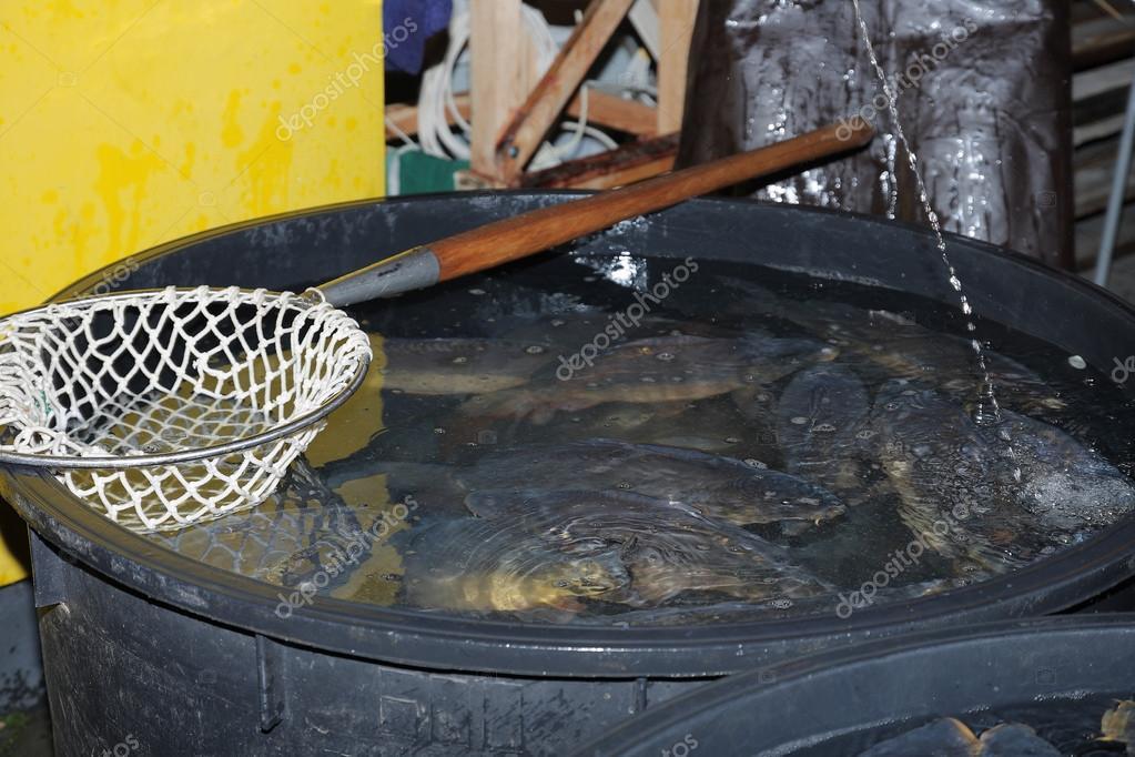 Weihnachtsessen Karpfen.Badewanne Mit Karpfen Verkauf Von Typischen Tier Für Weihnachtsessen