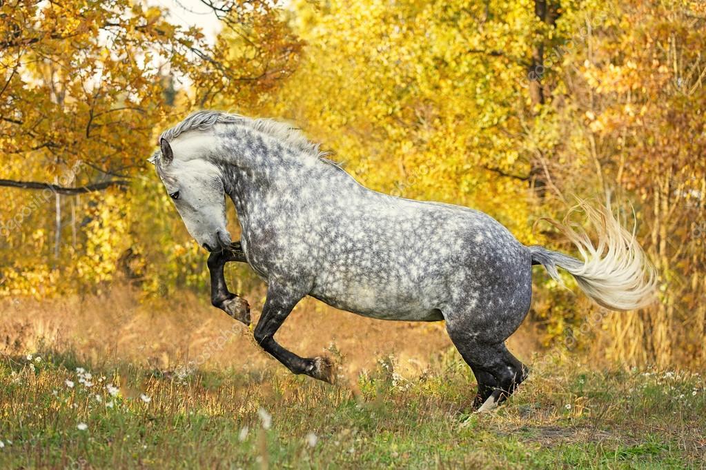 gratuit cheval gris jouant dans le paysage dautomne image de asyapozniak - Cheval Gratuit