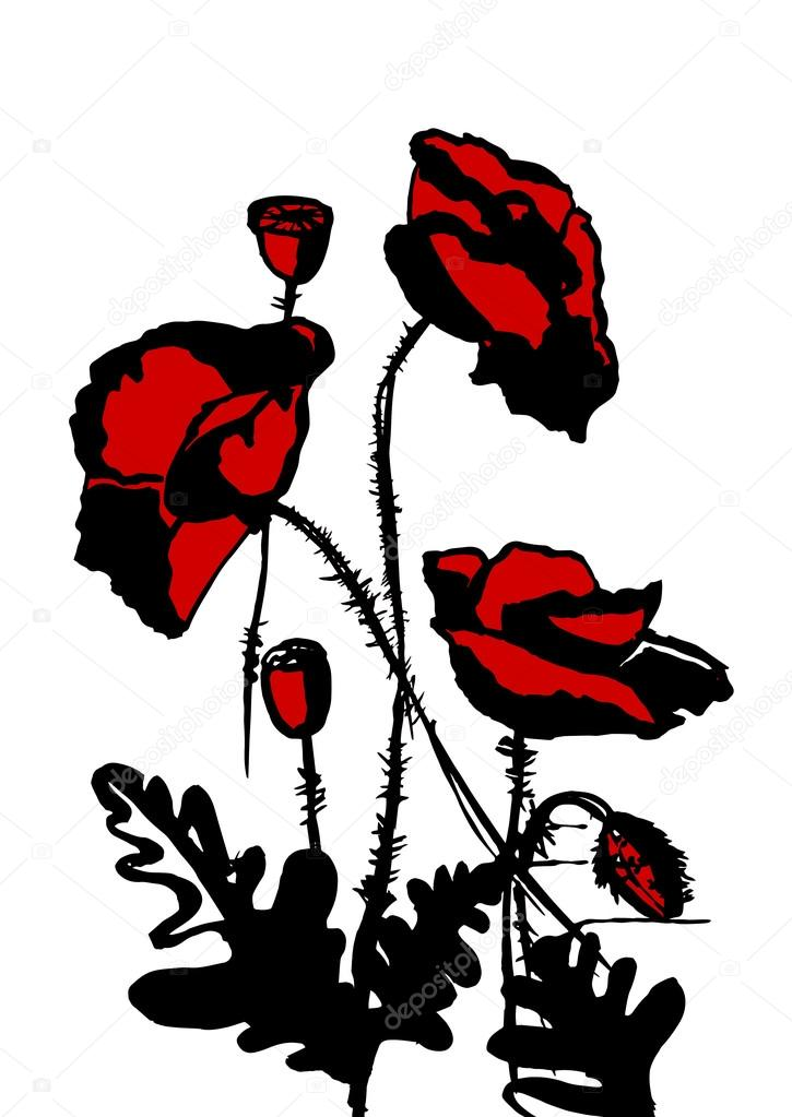 red and black poppies
