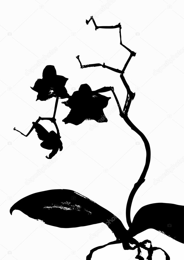 ink flowers orchid on stem