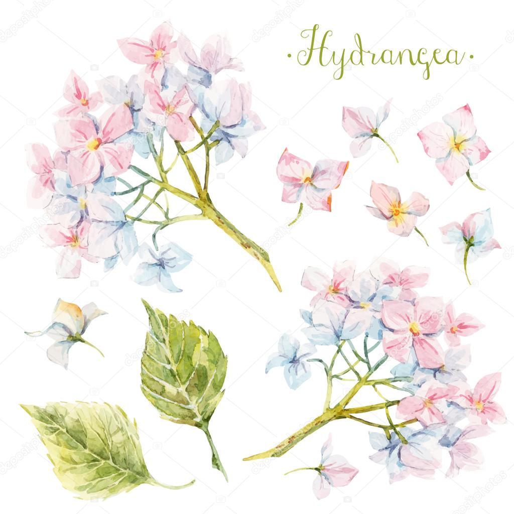 Watercolor hydrangea set