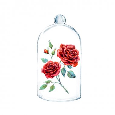 Rose in a glass case