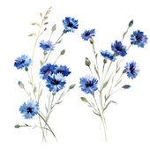 Fotografie Blue flowers 8