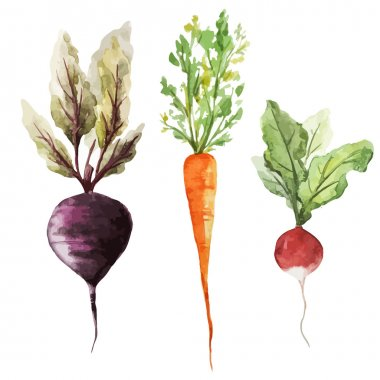 Watercolor drawing of vegetables