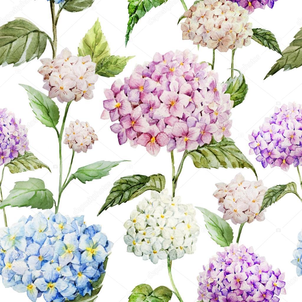 Dessin D Aquarelle Fleurs D Hortensia Photographie Zeninaasya