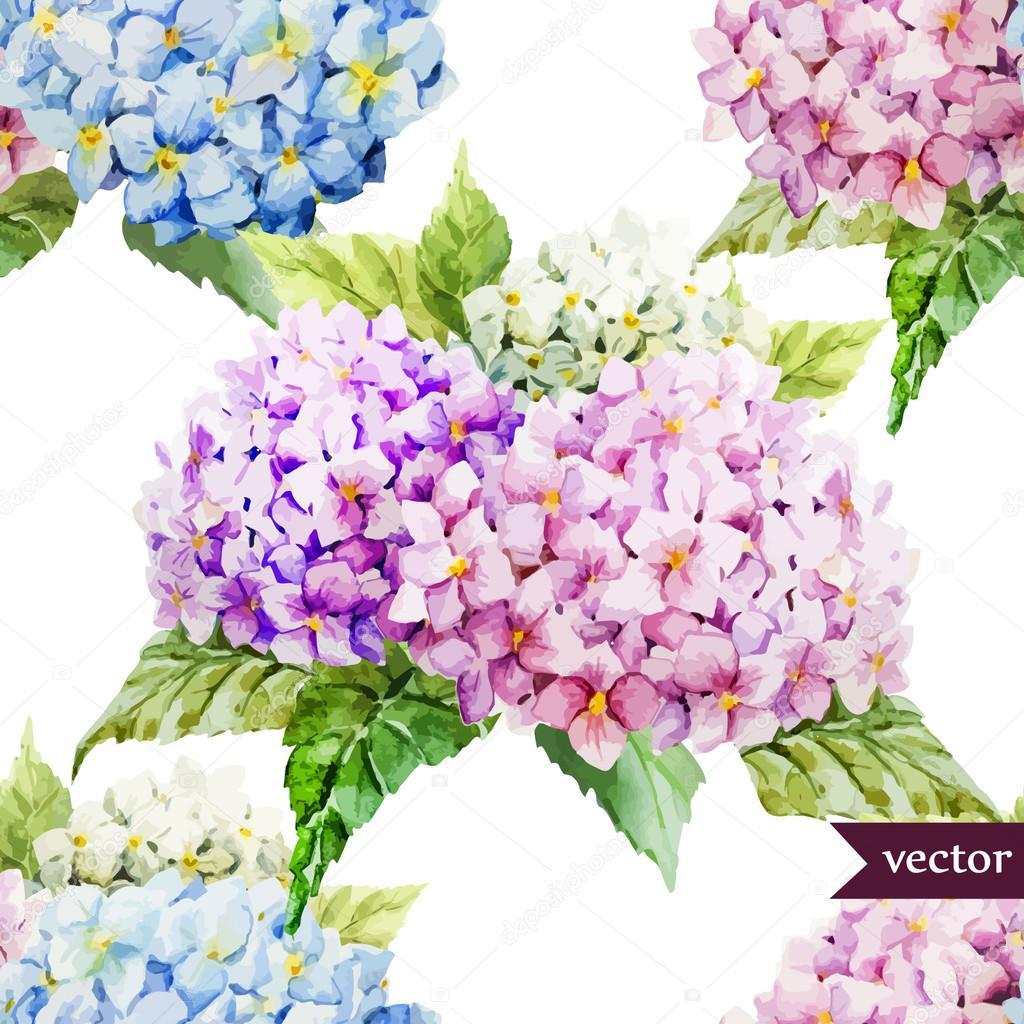 Dessin aquarelle de fleurs hortensia image vectorielle zeninaasya 63276387 - Taille des hortensias fleurs ...