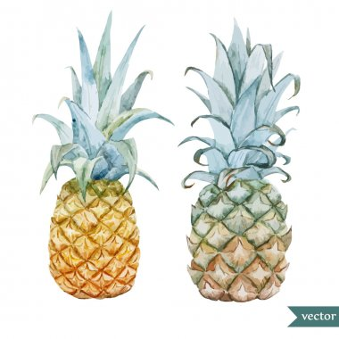 Watercolor pineapples, tropical plants and fruits
