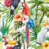Fotografie tropische Vögel