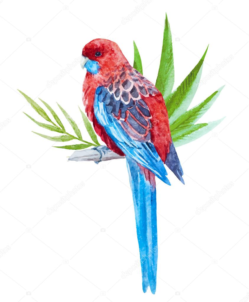 Nice tropical bird