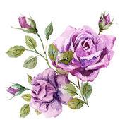 Fényképek Szép rózsák