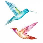 Akvarel colibri pták