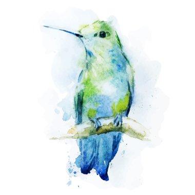 Watercolor colibri bird