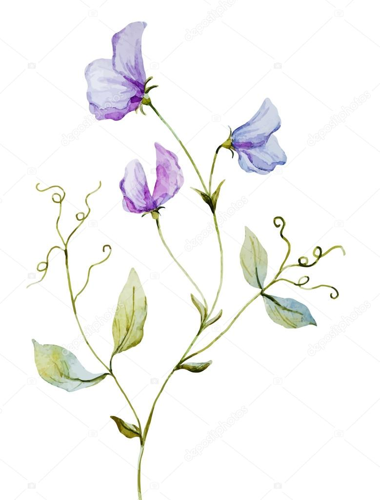 Nice watercolor flowers