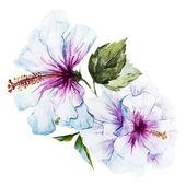Akvarel ibišek květ