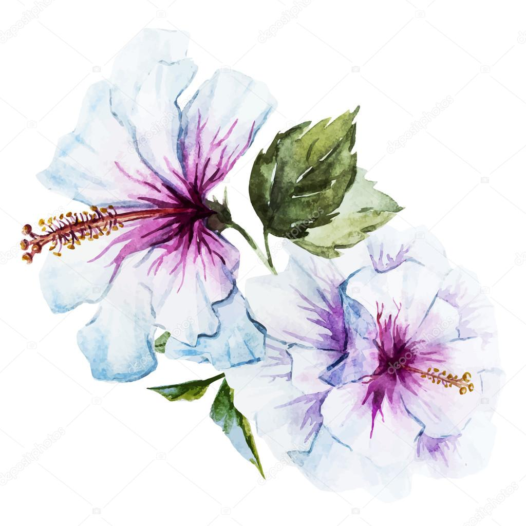 Watercolor hibiscus flower