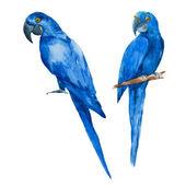 Fotografie Schöne Aquarell blaue Papageien