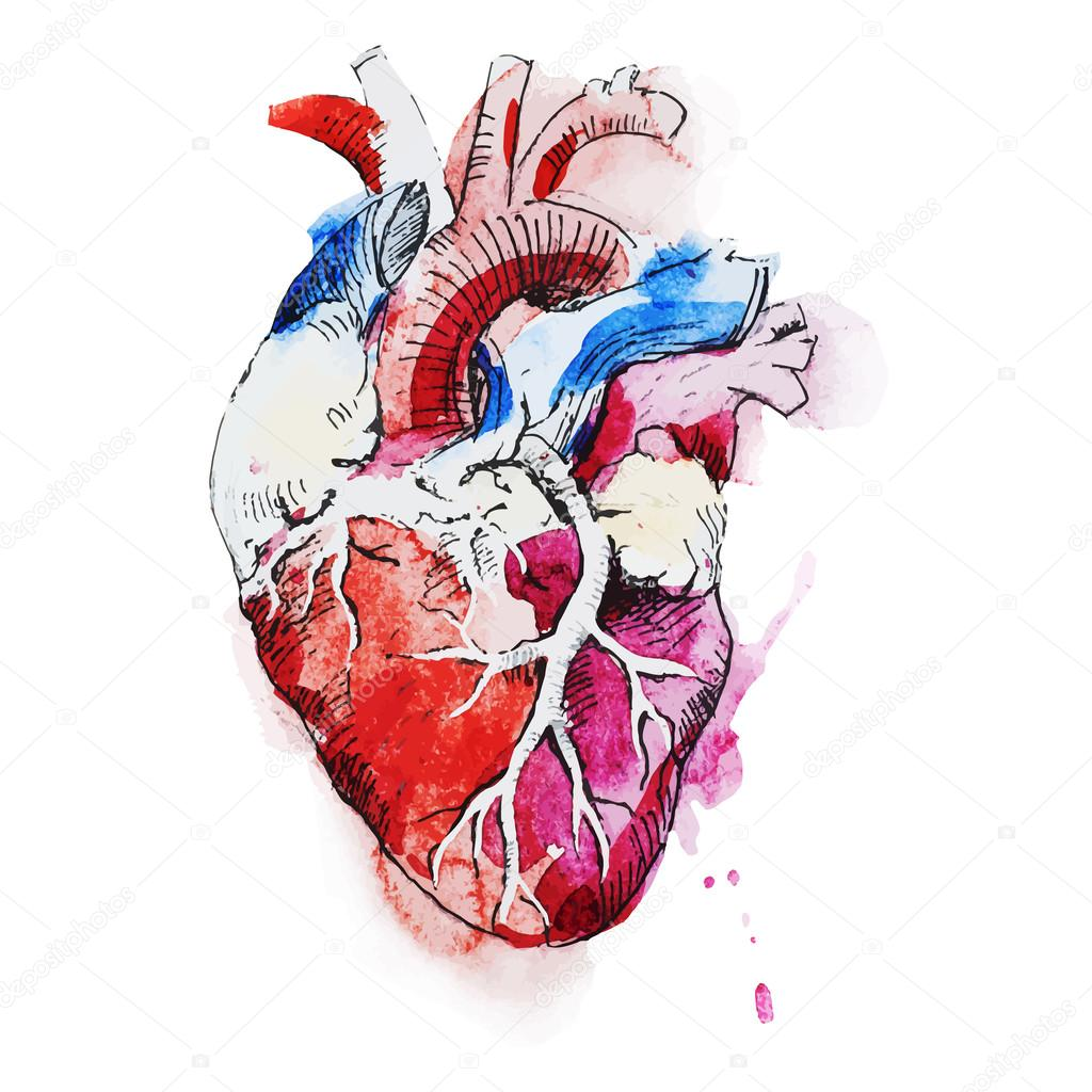 Watercolor human heart — Stock Vector © ZeninaAsya #76871939