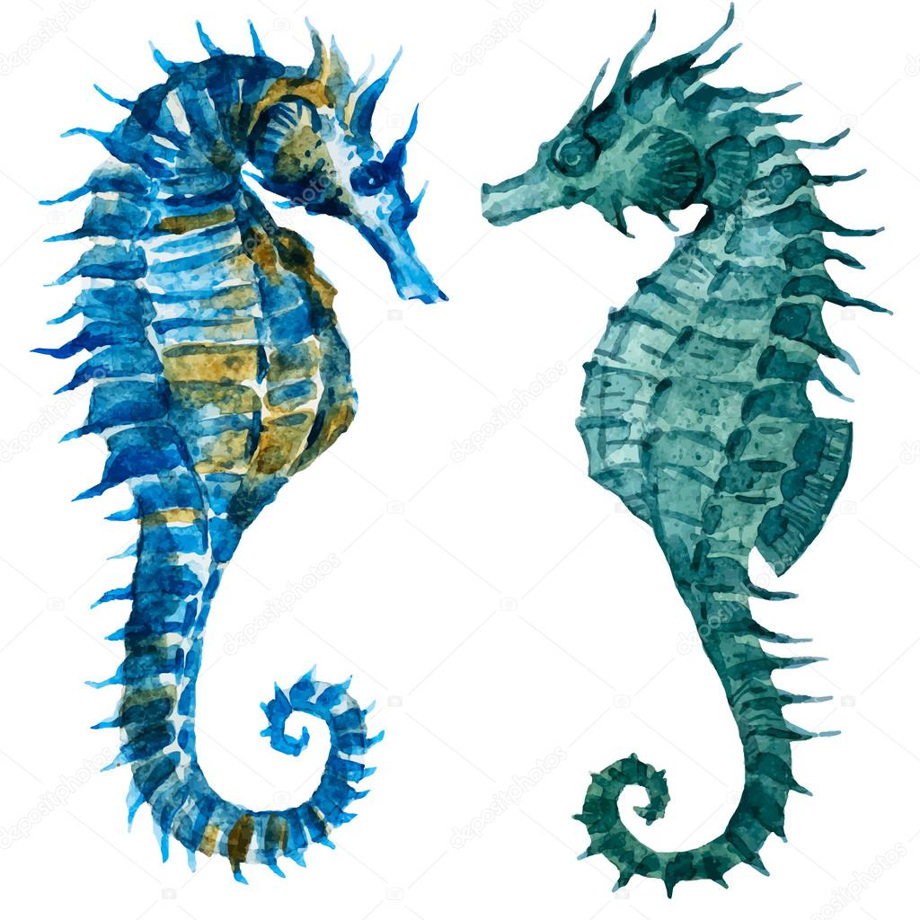 Watercolor seahorses