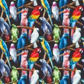 Vzorek akvarel papoušek