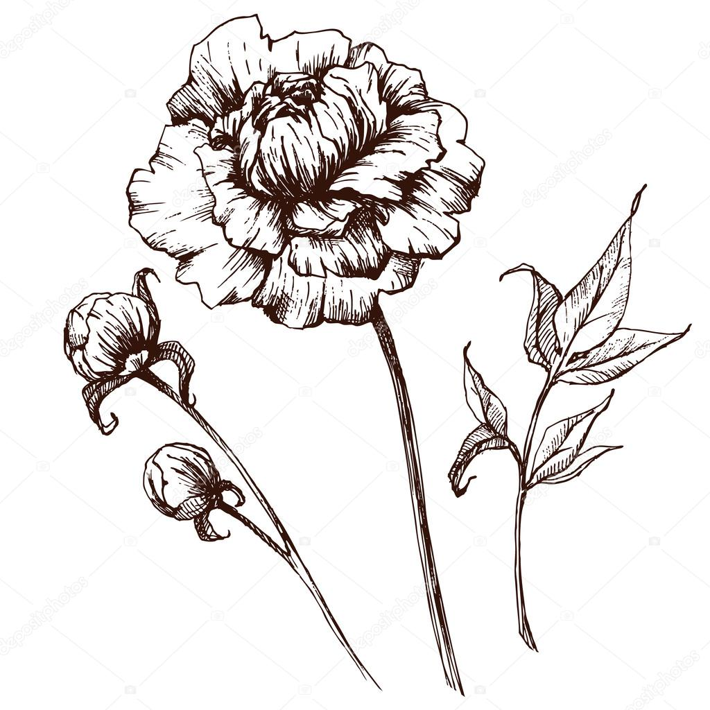 Vector graphic flowers