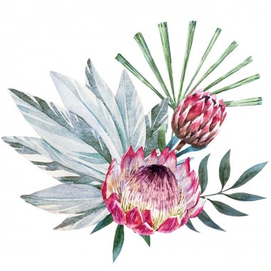 Raster tropical protea composition