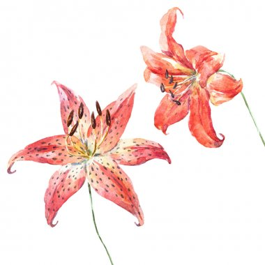 Raster watercolor lilies