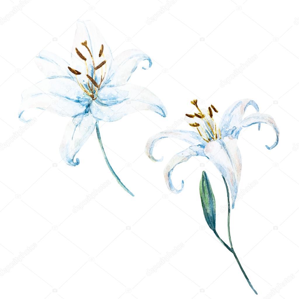 Raster watercolor lilies