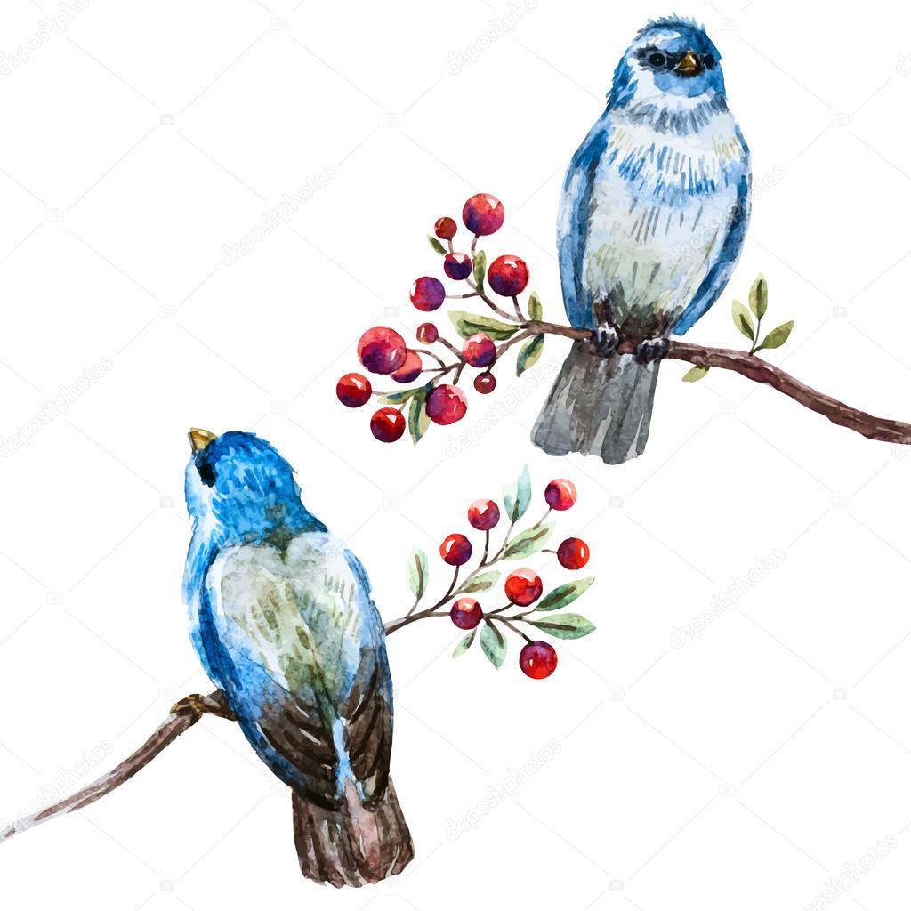 Aves acuarela agradable vector — Archivo Imágenes Vectoriales ...