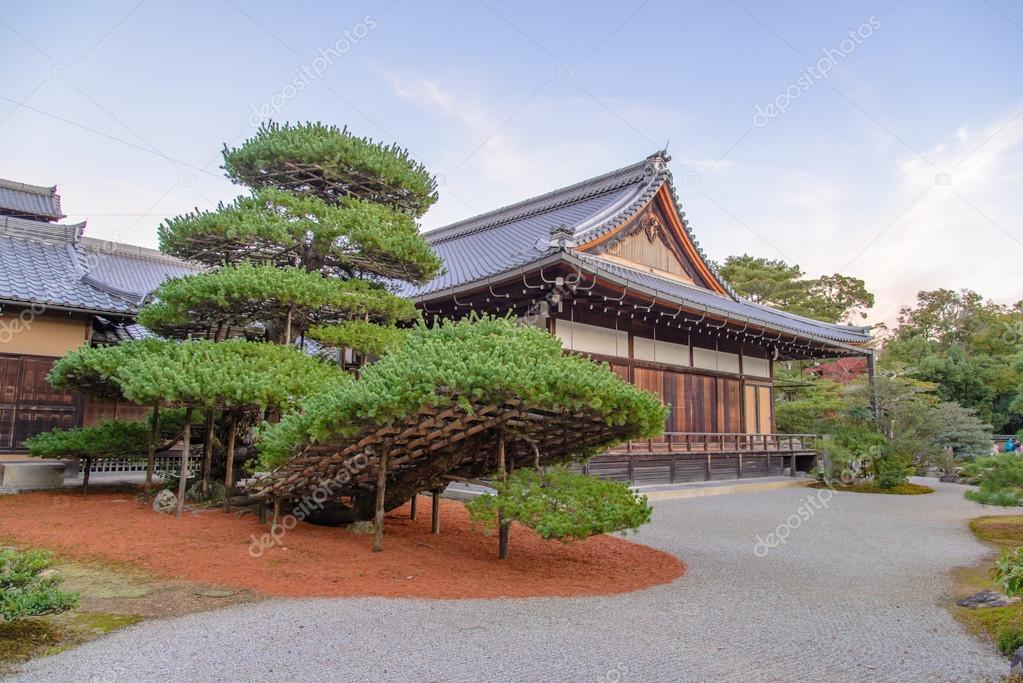 Gross Bonsai Baum Mit Buddhistischer Tempel Im Tempel Kinkaku Japan