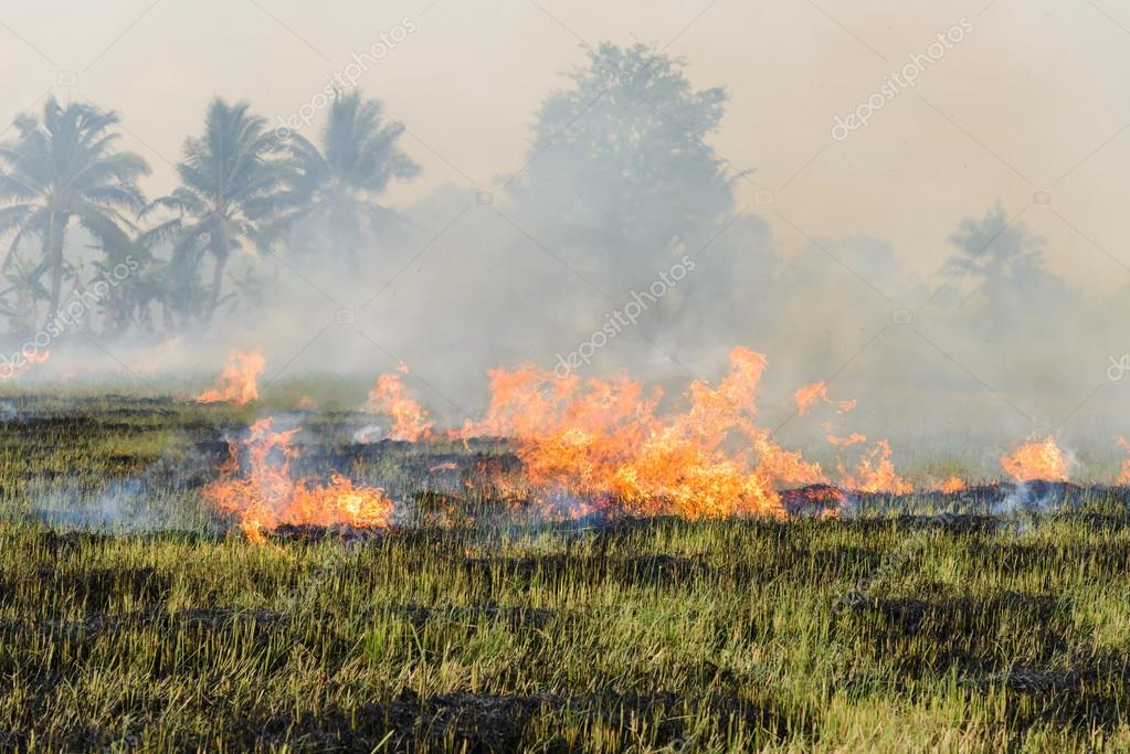 Burning straw stubble farmers when the harvest is complete. another cause of global warming
