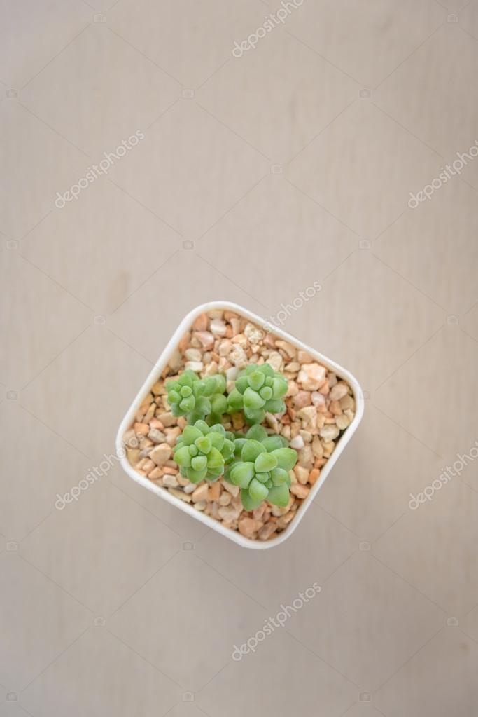 나무 테이블에 작은 선인장 화분에 식물의 평면도 — 스톡 사진 ...