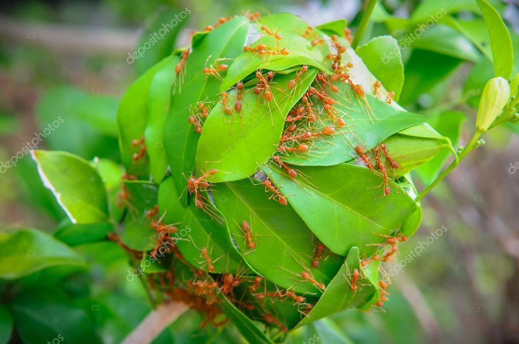 Kracht Planten Huis : De kracht van mieren voor hun huis te bouwen u stockfoto bigy