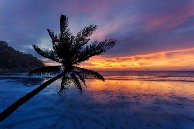 Coconut palms silhouette on sand beach