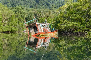 discarded wood boat in mangrove forest