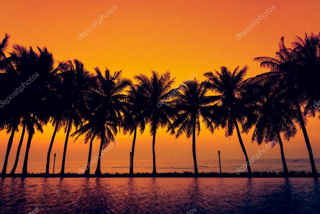 Sunset with silhouette Palm trees