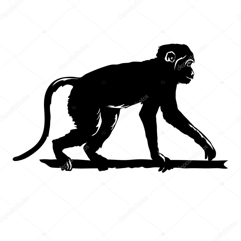 Monkey Black Silhouette On White Background Isolated Hand Drawn