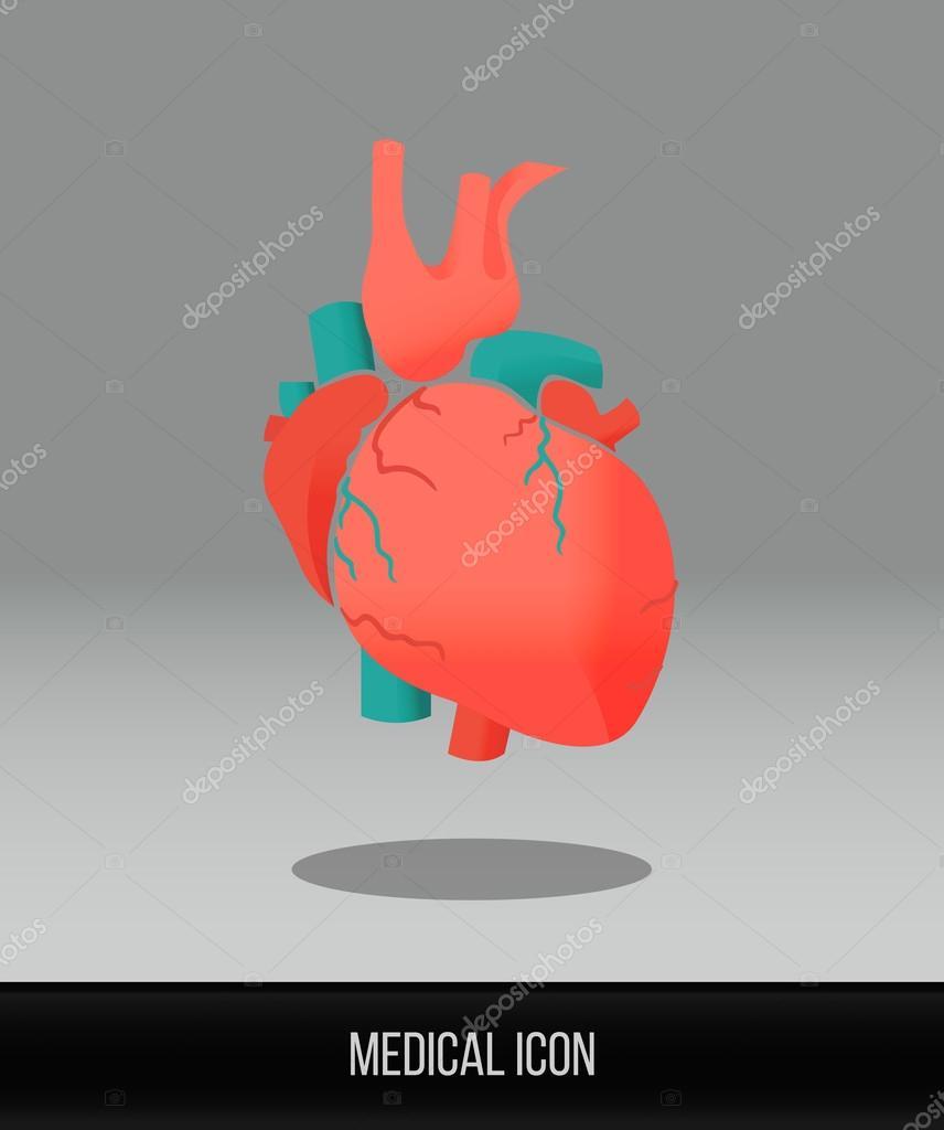 Medizinische-Symbol. Vektor-flach-Symbol des menschlichen Herzens ...